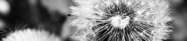 alergias y reflexología